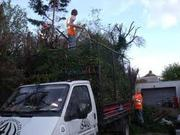 EMIRATE HEDGE/TREE SURGEONS