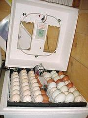 FERTILIZE PARROT EGGS AND HANDRAISED PARROT BIRDS FOR SALE